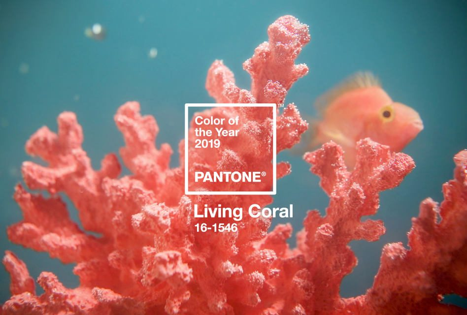 And the Pantone Colour of the Year for 2019 is…living coral